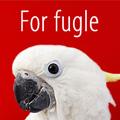 Særtilbud til fugle